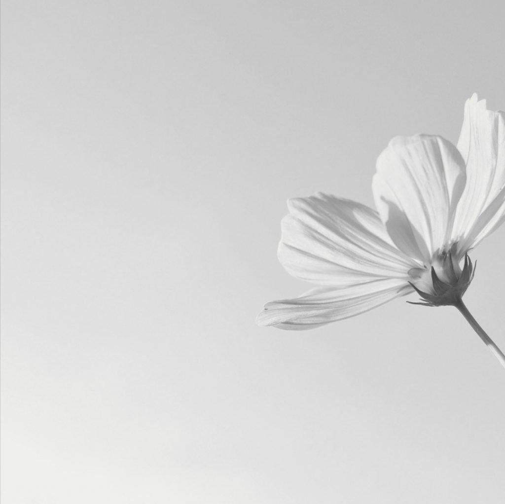 la vulnerabilidad no sabe ser deshonesta